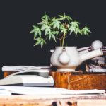 Legal Assistance for Cannabis Business Owners in California